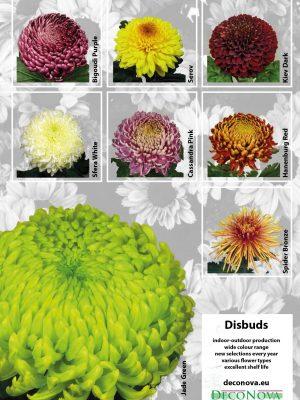Leaflet Blooms