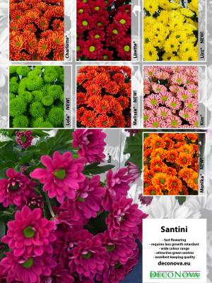 Leaflet-Santini