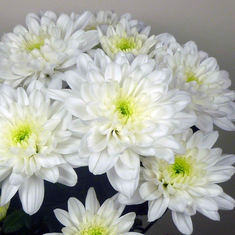 Baltica® White