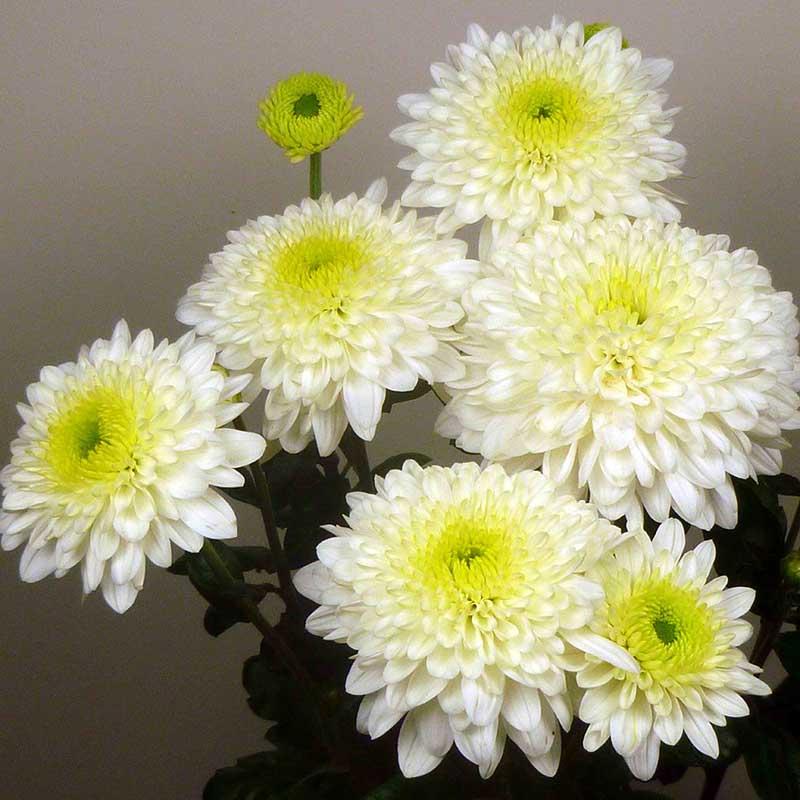 Blenda White